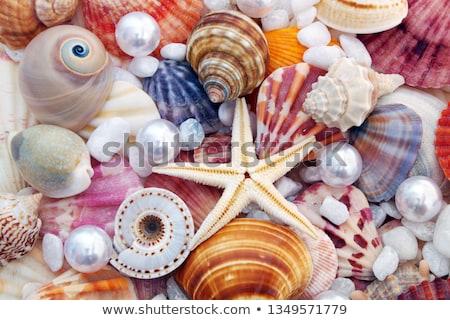 Starfish perle conchiglia ostrica bianco conchiglie Foto d'archivio © marilyna