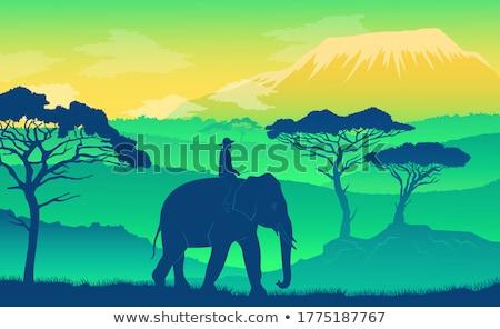 éléphant africaine savane coucher du soleil silhouettes animaux Photo stock © robuart