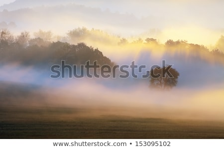 summer misty morning country view stock photo © wildman