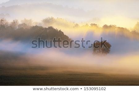 Foto d'archivio: Estate · misty · mattina · paese · view · frazione