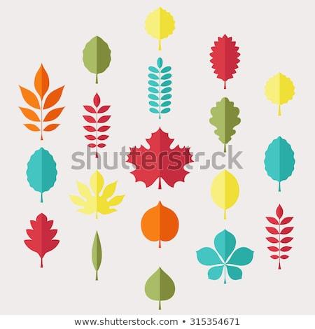 autumn leaf and apple stock photo © irinavk