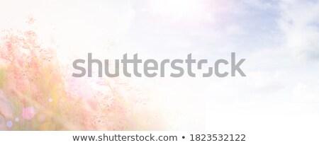 erva · daninha · jardim · verão - foto stock © sweetcrisis