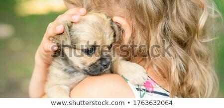 Sharpei köpek kız güzel kız seksi mutlu Stok fotoğraf © csakisti