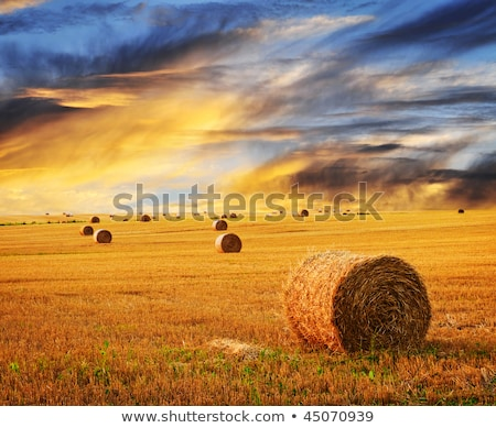 Stockfoto: Farm Field With Hay Bales