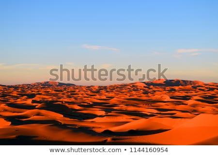 Camels trekking across the sahara  Stock photo © danielgilbey