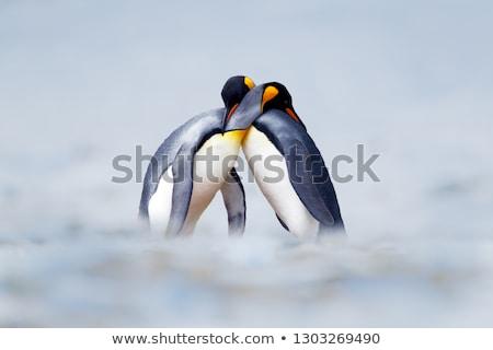 Pingouin amour couple poissons cadeau oiseau Photo stock © kistrialos