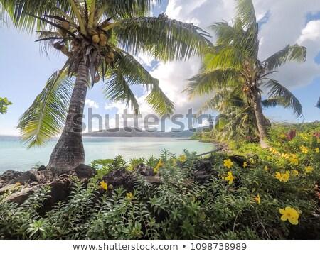 Ocean widoku bujny tropikalnych zieleń luka Zdjęcia stock © jrstock