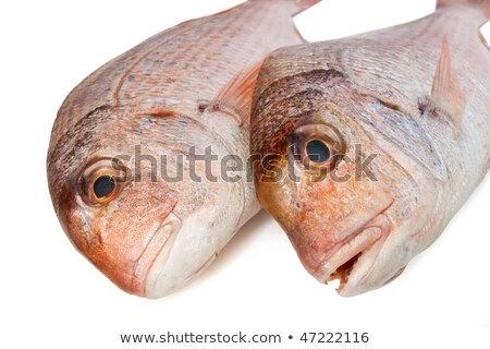couch sea bream closeup stock photo © Antonio-S