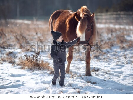 young woman stroking spotted horse stock photo © konradbak