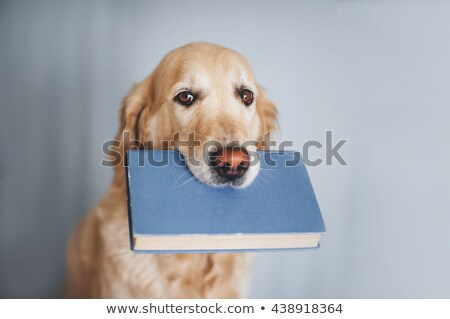 kleurboek · huisdieren · boek · ontwerp · verf · slang - stockfoto © clairev