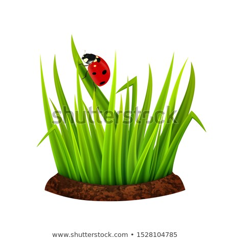 vector ladybird on a grass leaf  Stock photo © freesoulproduction