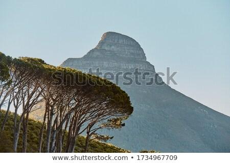 Cidade · do · Cabo · tabela · montanha · panorama · linha · do · horizonte · ver - foto stock © bradleyvdw