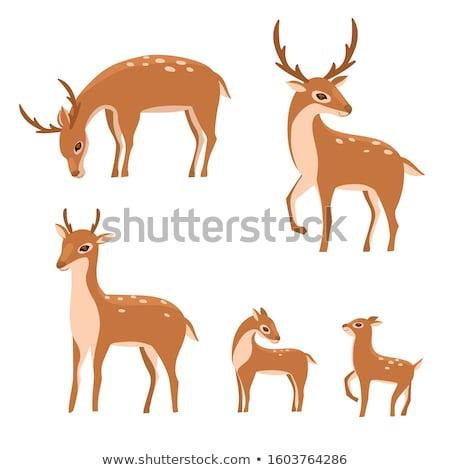 Sika deer Stock photo © maros_b