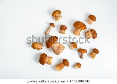 Hongos musgo boleto alimentos naturaleza hoja Foto stock © digoarpi