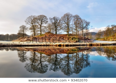 Copse of bare deciduous trees in winter reflected  Stock photo © papa1266