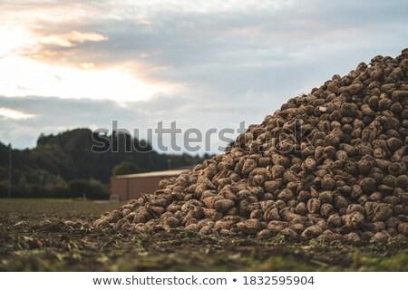 Excavadora crudo azúcar almacenamiento fábrica edificio Foto stock © photosoup