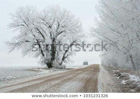 Préri tájkép tél Saskatchewan Kanada festői Stock fotó © pictureguy
