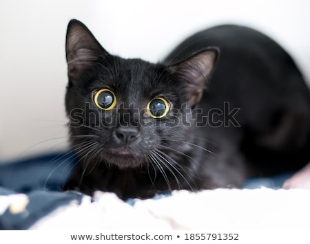 kitty  glaring eyes Stock photo © Sonar