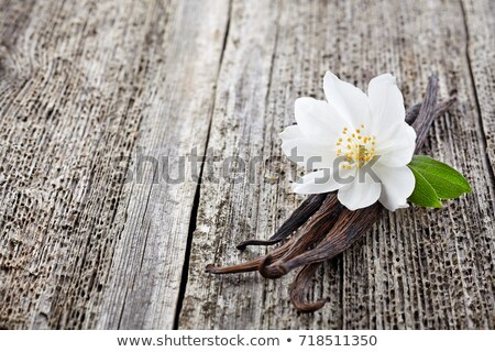Jázmin fából készült textúra tavasz terv kert Stock fotó © tycoon