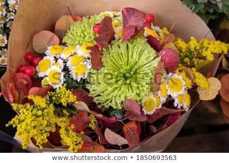 virág · egyezség · piros · narancs · citromsárga · izolált - stock fotó © madelaide