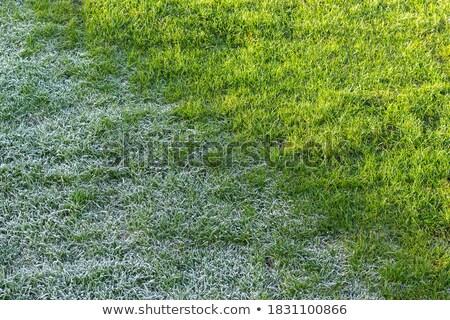 Güneş don çim soğuk Stok fotoğraf © suegresham