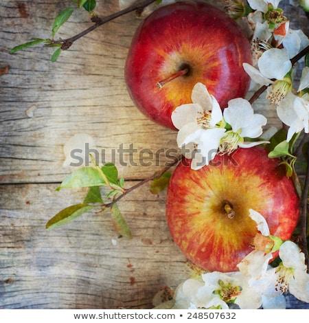 Appelboomgaard exemplaar ruimte organisch voedsel vruchten Stockfoto © stevanovicigor