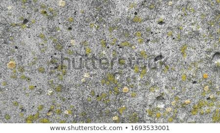Musgo stonewall edifício construção parede abstrato Foto stock © Paha_L