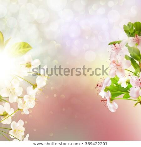 cseresznyevirágzás · égbolt · húsvét · tavasz · levél · kert - stock fotó © beholdereye