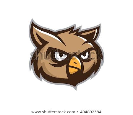 Coruja cabeça mascote desenho animado vetor educação Foto stock © doddis