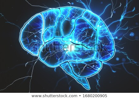 Emberi agy anatómia struktúra 3d illusztráció orvosi test Stock fotó © tussik