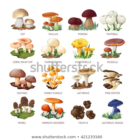 Stock photo: Vector flat style set of mushrooms.