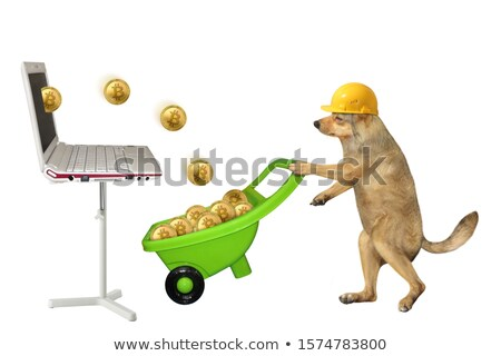 Yellow dog miner mining bitcoin gold coin Stock photo © orensila