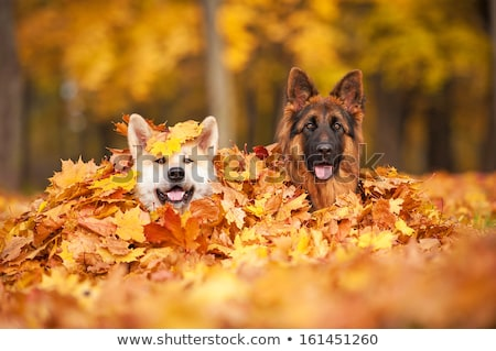 Two friends lying on autumn leaves Stock photo © IS2