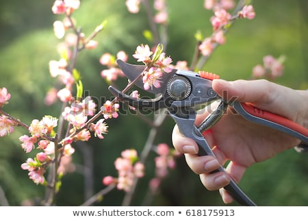женщину дерево саду красоту завода Сток-фото © IS2