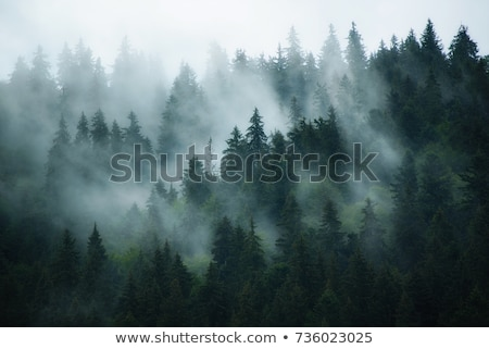 Mountain landscape with fir forest and fog Stock photo © Kotenko