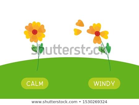 Engels tegenover woord groene illustratie achtergrond Stockfoto © bluering