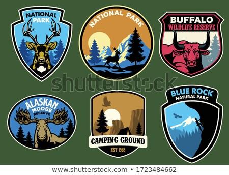 Przyrody banner zwierząt ilustracja drzewo drewna Zdjęcia stock © bluering