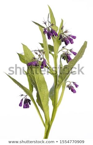 Flor haste plantas quadro Foto stock © adamr