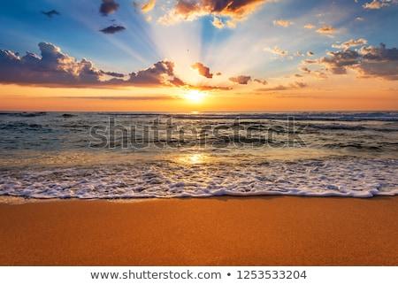 Świt plaży krajobraz Kokosowe drzewo niebo Zdjęcia stock © bbbar