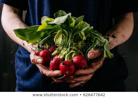 野菜 新鮮な 庭園 健康 自然食品 トマト ストックフォト © Valeriy