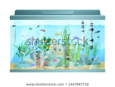Aquarium Fish Swimming Among Stones and Seaweed Stock photo © robuart