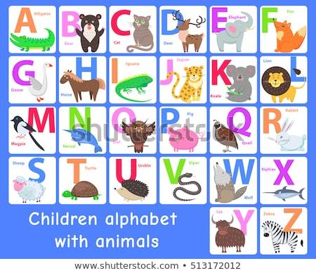 Animal Alphabet A, B, C and D Stock photo © zsooofija