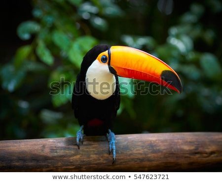 Stock photo: Big beautiful parrot sitting on a tree branch