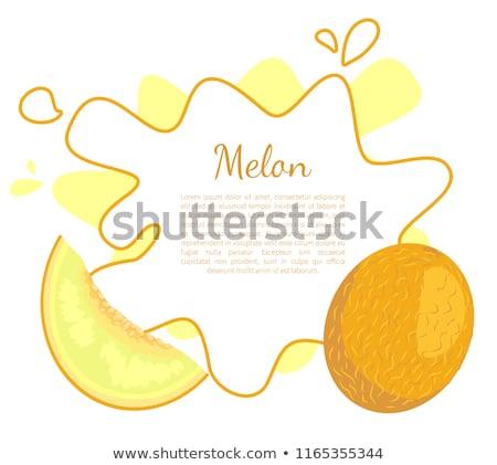 Melone esotiche succosa pietra frutta vettore Foto d'archivio © robuart