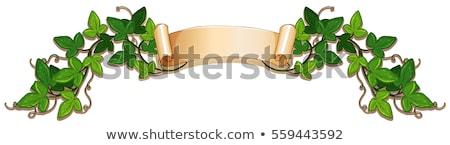 バナー デザイン 緑 ツタ つる 実例 ストックフォト © colematt