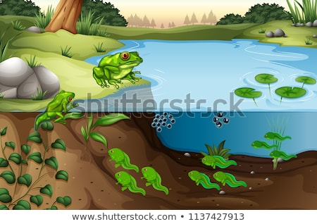Stock photo: Green frog life cycle scene