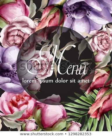 roze · rozen · vector · aquarel · elegantie · bloemen - stockfoto © frimufilms