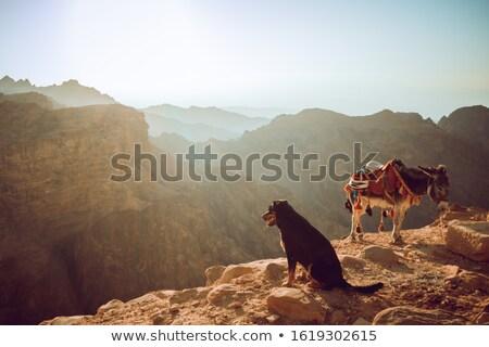 donkey in petra stock photo © hitdelight