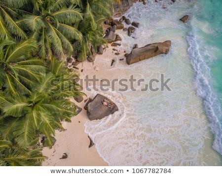 Ada Seyşeller görmek palmiye ağaçları plaj Stok fotoğraf © AndreyPopov