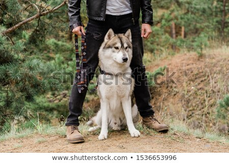 Cute and clever purebred husky dog sitting on footpath by legs of his owner Stock photo © pressmaster